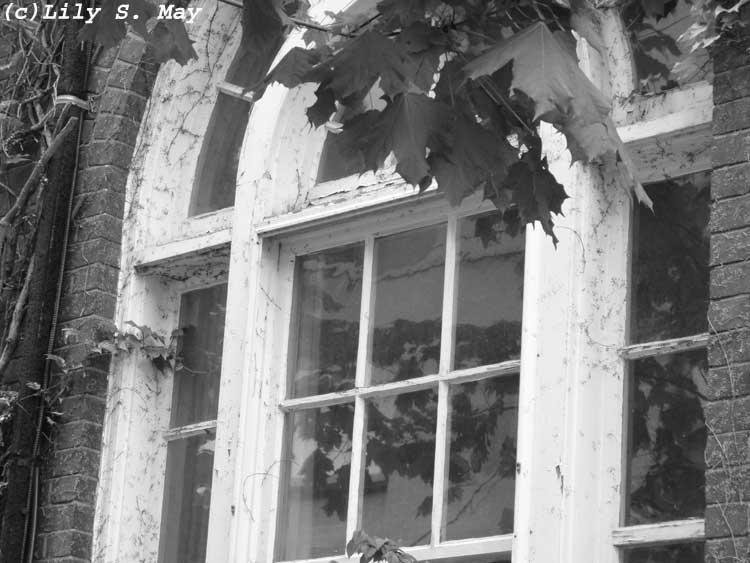 U of T window