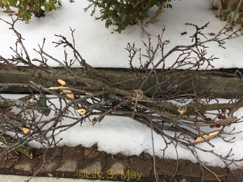After the ice storm 1